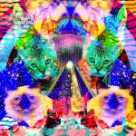 Psychedelic Cats